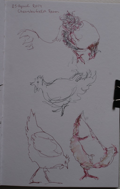 Quick pen sketch of chickens