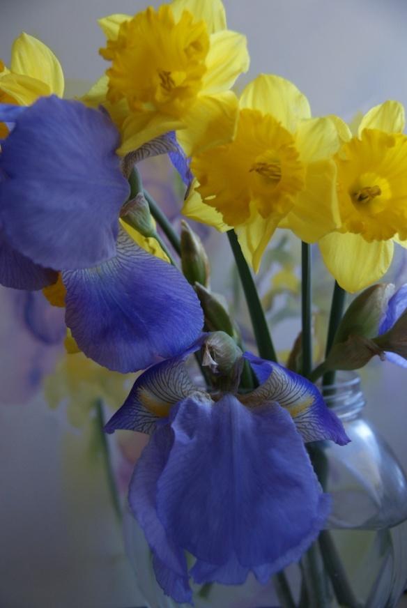 Irises and daffodils