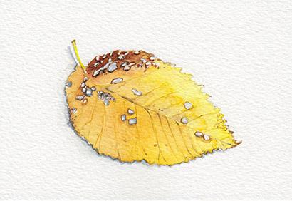 Autumn Leaf watercolour postcard