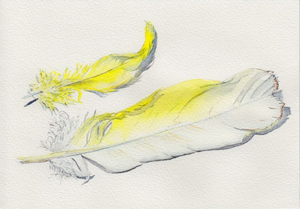 Watercolour painting of two yellow and white Cockatoo feathers