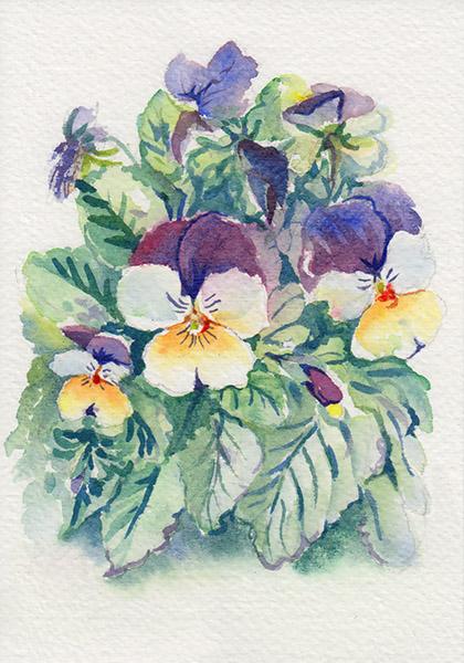 Watercolour painting of pansies